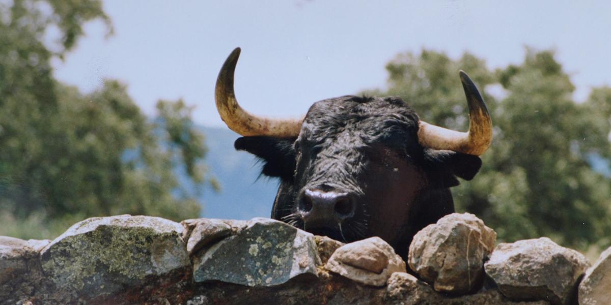 """Resultado de imagen de toros de """"Domecq"""""""